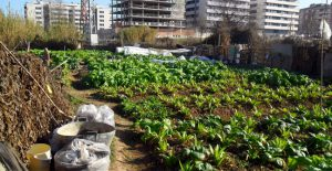 que plantar en un huerto urbano
