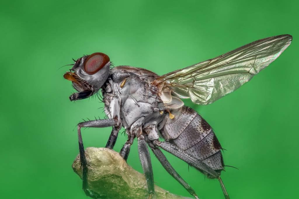 trucos para ahuyentar moscas