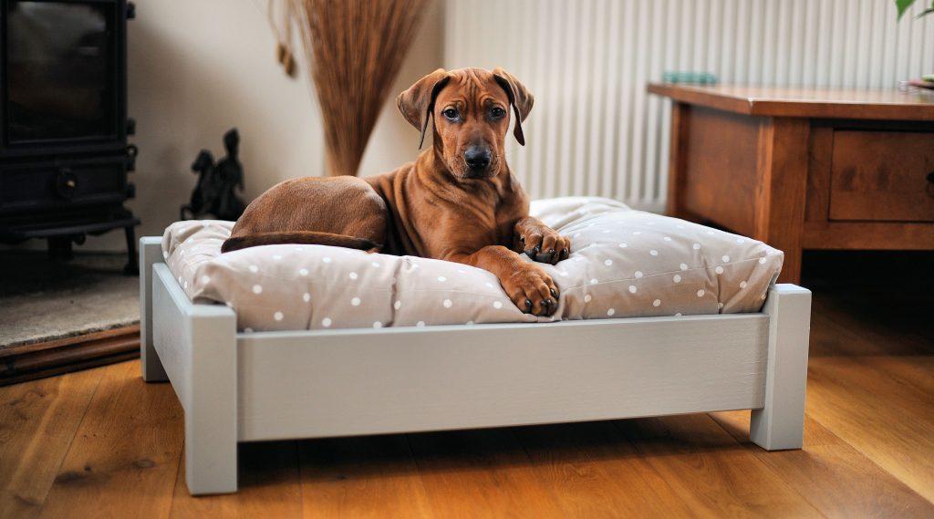 adaptar tu casa a una mascota